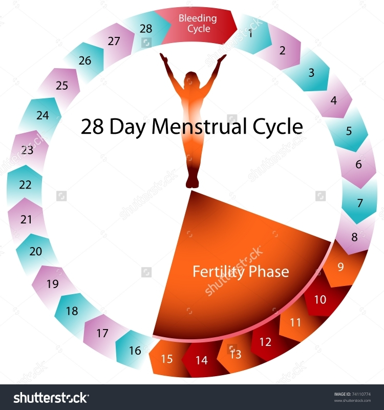 an image of a menstrual cycle chart stock vector illustration 3abry