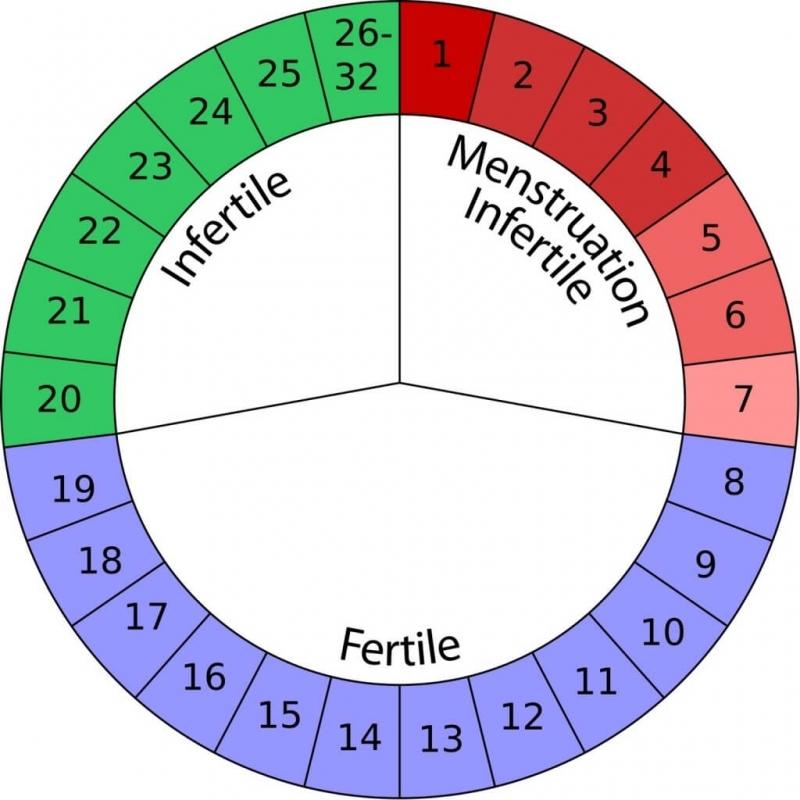 Natural Birth Control Options Amp Suggestions Mama Natural  xjb