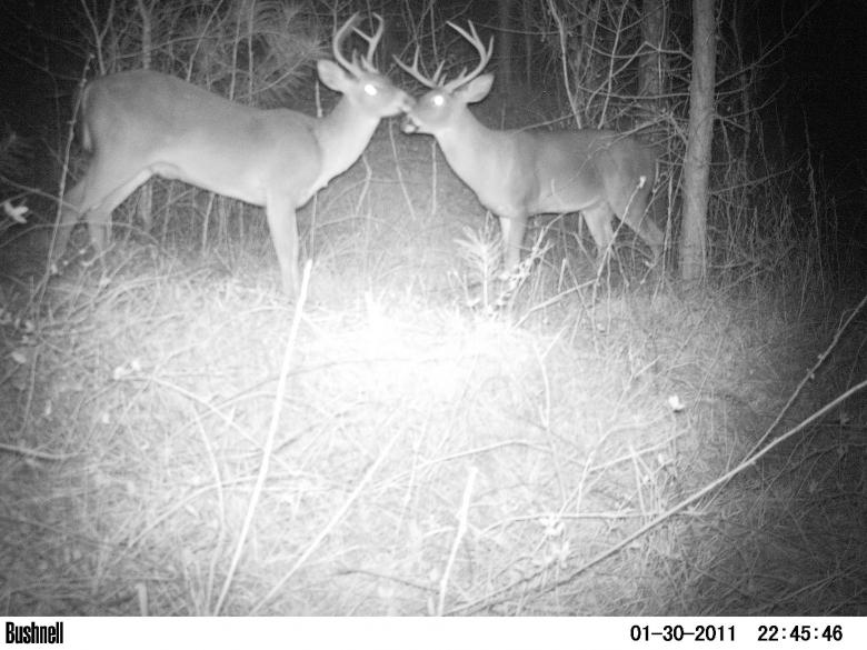 Southern Pines Hunting Club3abry