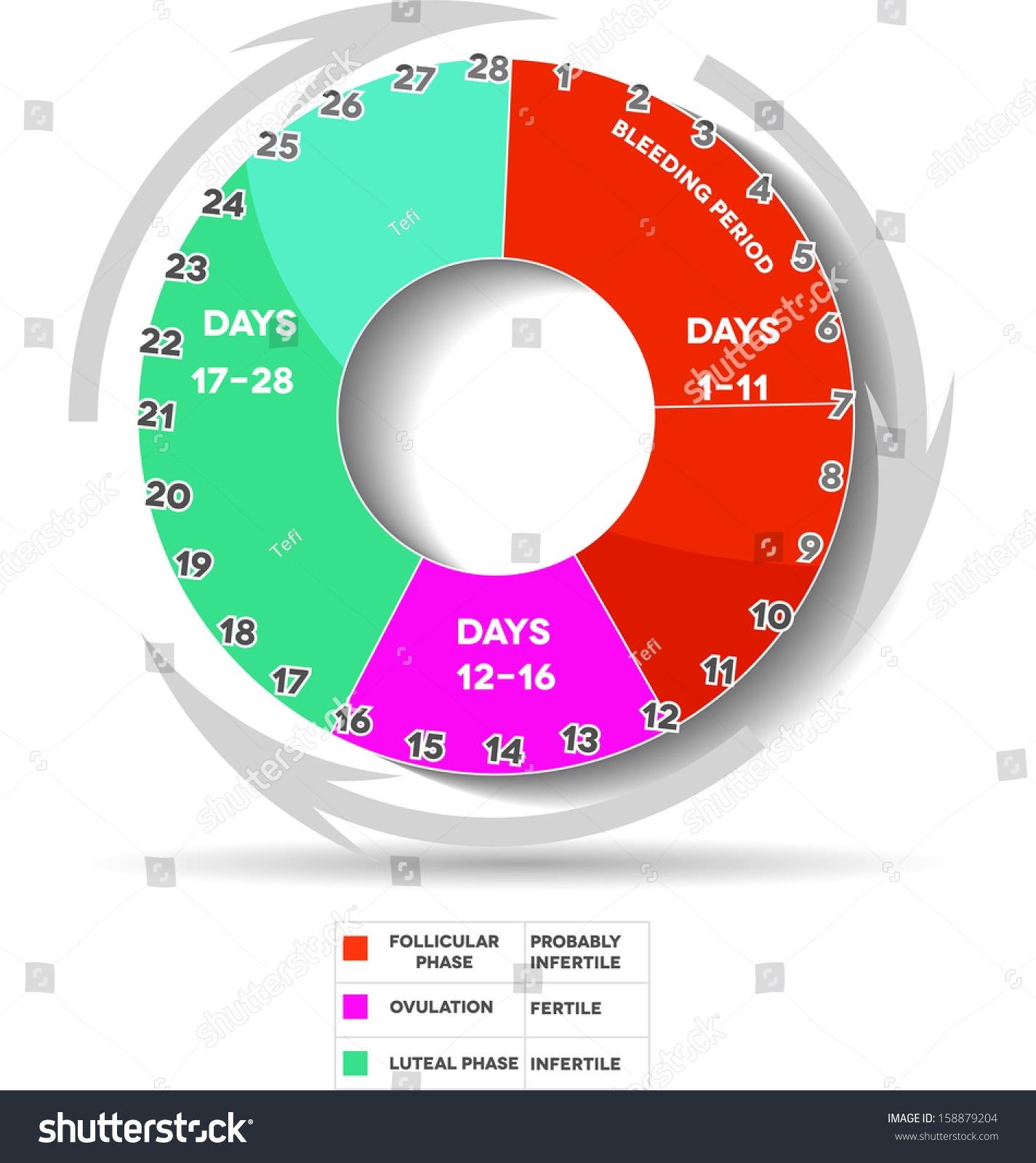 Menstrual Cycle Calendar Average Menstrual Cycle Stock Vector3abry