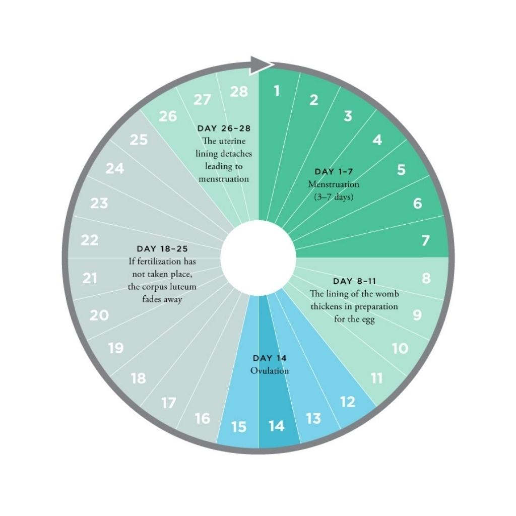 Bamed Ovulation Calendar Pertaining To Encourage Flash Design3abry