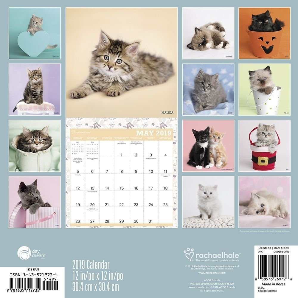 2019 Hale Cats 2019 Wall Calendar, Assorted Catsacco Brands Calendar 2019 Cats