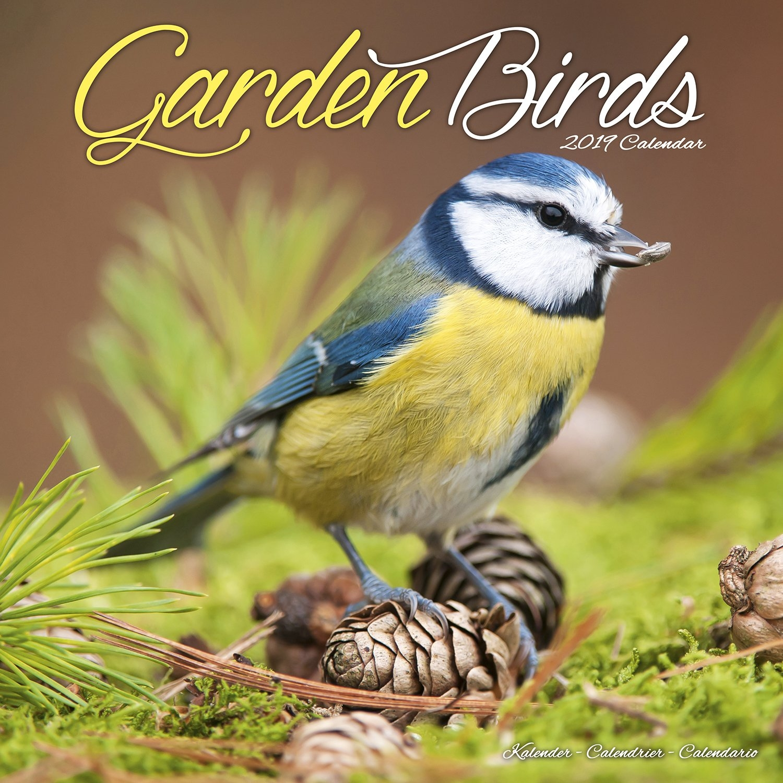 Garden Birds Wall Calendar 2019 - Walmart Calendar 2019 Birds