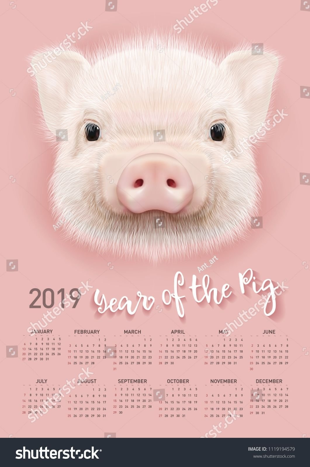 Pig Calendar For 2019. Vector Editable Template With Concept. Symbol Calendar 2019 Year Of The Pig