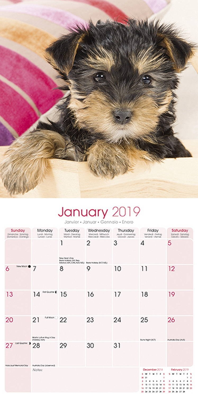 Yorkshire Terrier Calendar 2019   Pet Prints Inc. Calendar 2019 Yorkshire