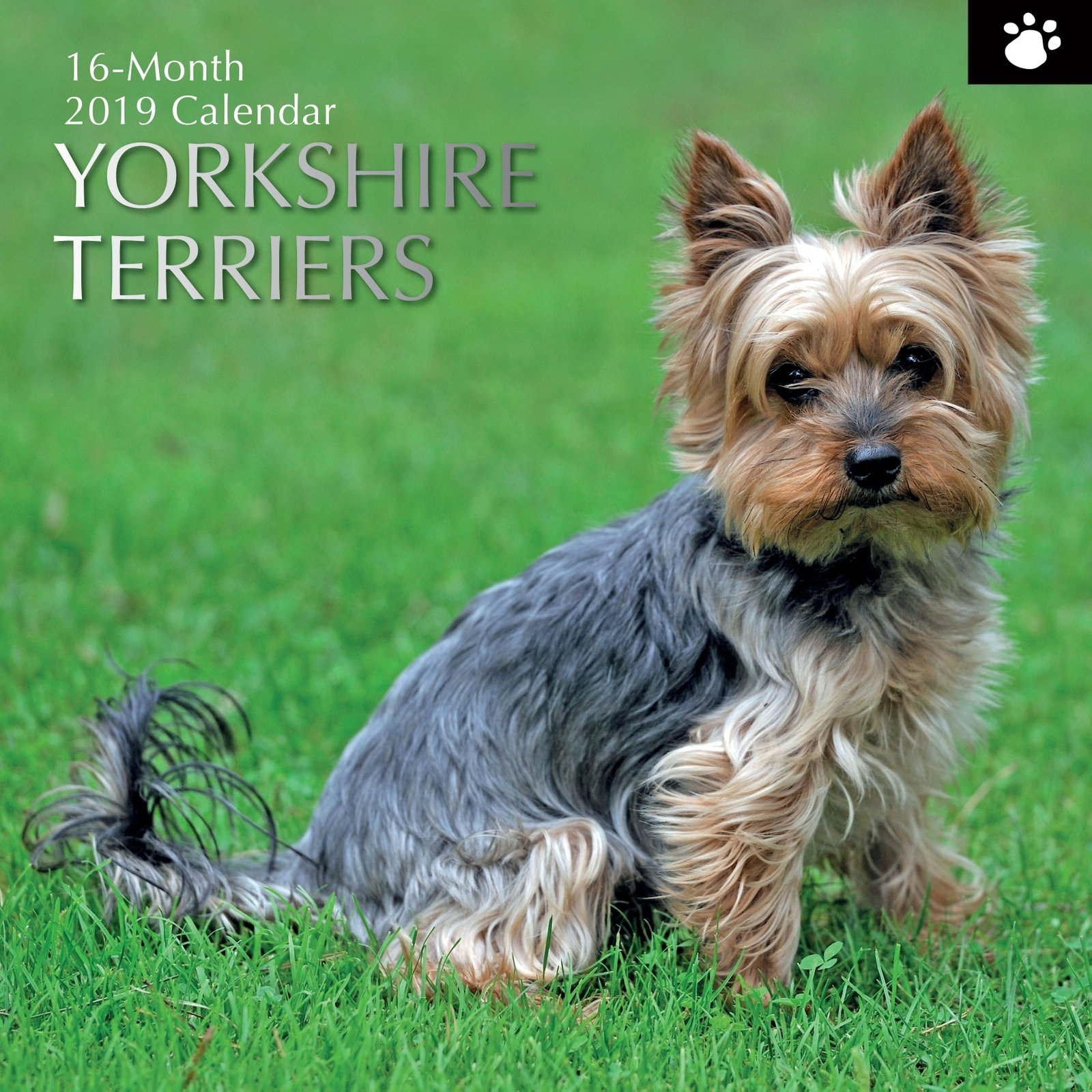 Yorkshire Terriers - 2019 Wall Calendar 16 Month Premium Square Calendar 2019 Yorkshire
