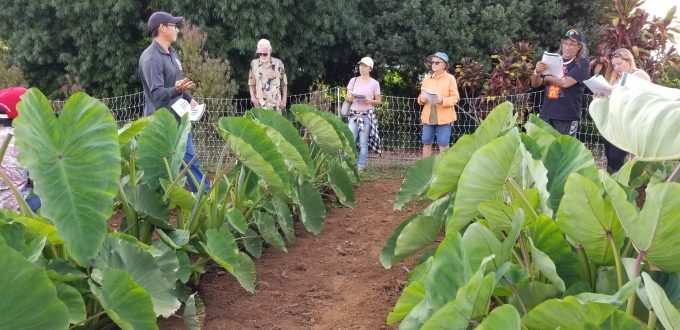 Commercial Crops - Get Local Hawaiian Calendar Fishing And Planting